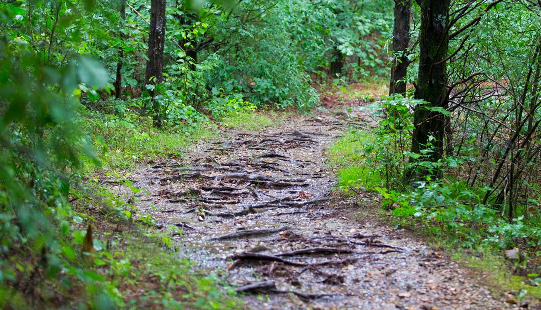Явган аялал буюу ууланд алхахын ач тус